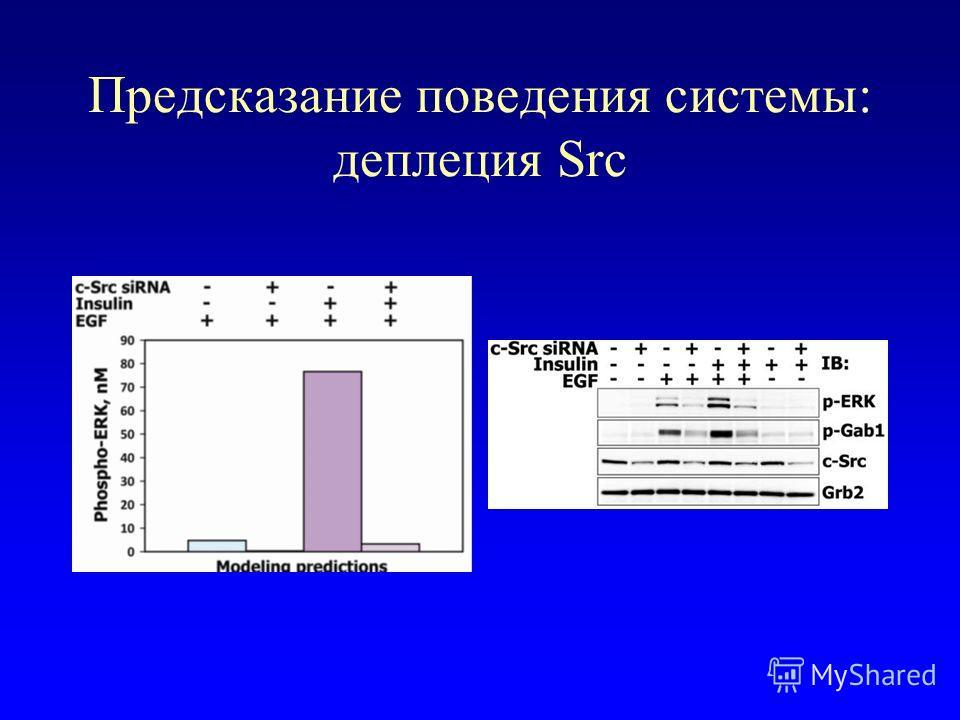 Предсказание поведения системы: деплеция Src