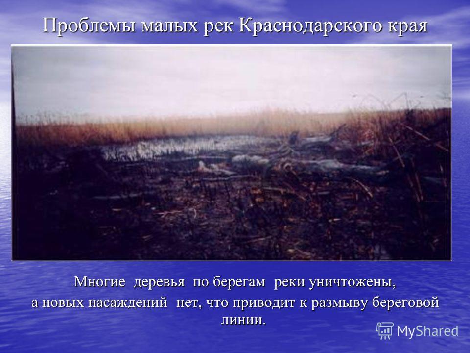 Проблемы малых рек Краснодарского края Многие деревья по берегам реки уничтожены, а новых насаждений нет, что приводит к размыву береговой линии.
