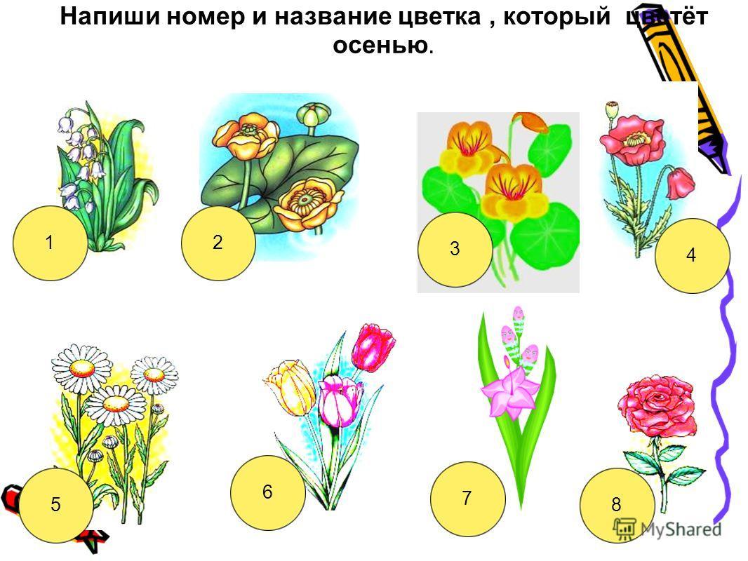 Напиши номер и название цветка, который цветёт осенью. 12 3 4 5 6 7 8