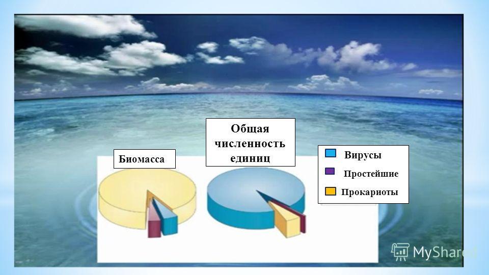 Биомасса Общая численность единиц Вирусы Простейшие Прокариоты