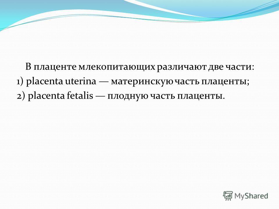 В плаценте млекопитающих различают две части: 1) placenta uterina материнскую часть плаценты; 2) placenta fetalis плодную часть плаценты.