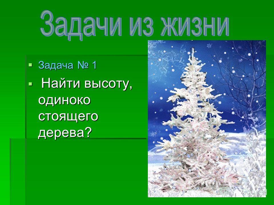 Задача 1 Задача 1 Найти высоту, одиноко стоящего дерева? Найти высоту, одиноко стоящего дерева?