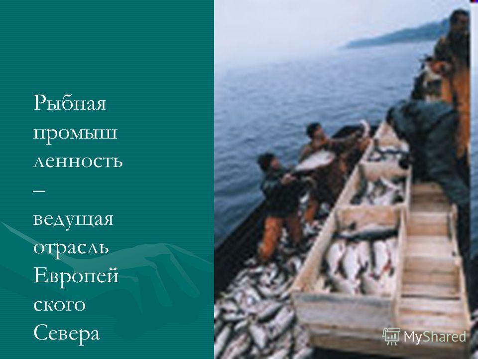 Рыбная промыш ленность – ведущая отрасль Европей ского Севера