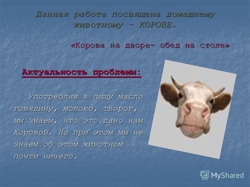 Данная работа посвящена домашнему животному – КОРОВЕ. «Корова на дворе- обед на столе» Актуальность проблемы: Употребляя в пищу масло Употребляя в пищу масло говядину, молоко, творог, мы знаем, что это дано нам Коровой. Но при этом мы не знаем об это