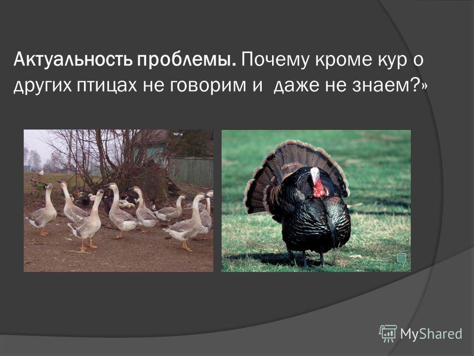 Актуальность проблемы. Почему кроме кур о других птицах не говорим и даже не знаем?»