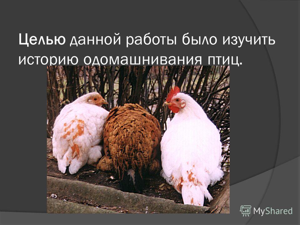 Целью данной работы было изучить историю одомашнивания птиц.