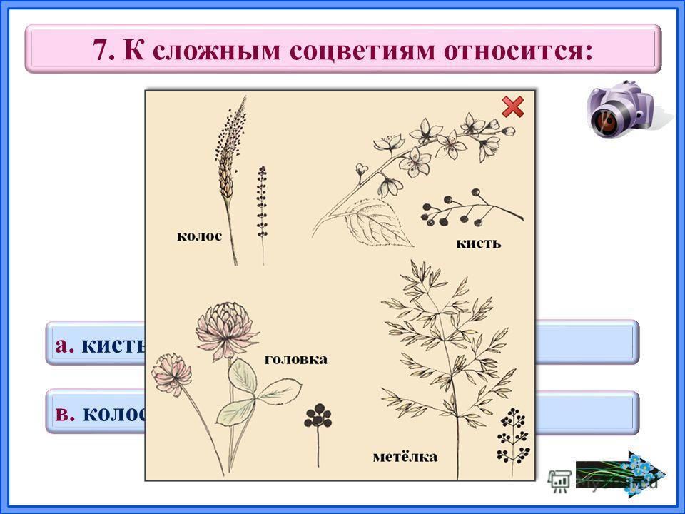 7. К сложным соцветиям относится: в. колос а. кисть г. головка б. метёлка