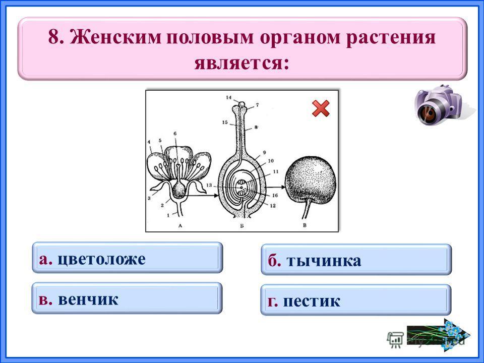 8. Женским половым органом растения является: а. цветоложе б. тычинка в. венчик г. пестик