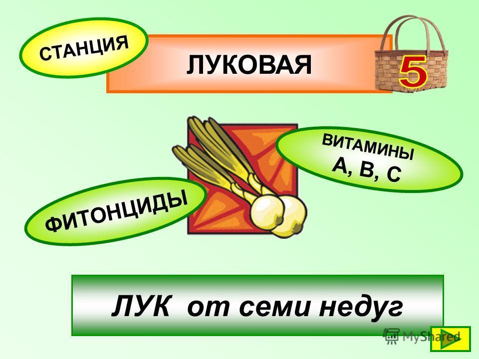 ЛУКОВАЯ СТАНЦИЯ ФИТОНЦИДЫ ВИТАМИНЫ А, В, С ЛУК от семи недуг