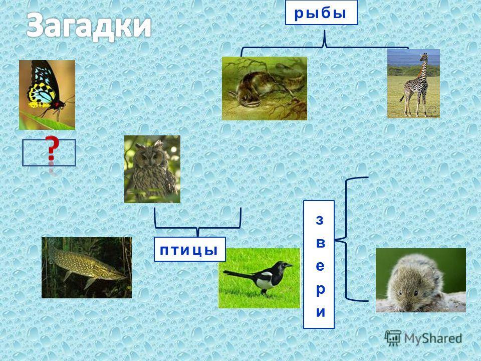 рыбы птицы
