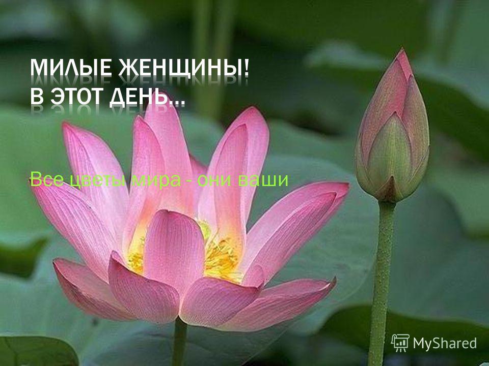 Все цветы мира - они ваши