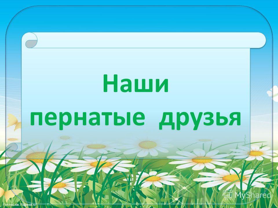 FokinaLida.75@mail.ru Наши пернатые друзья Наши пернатые друзья
