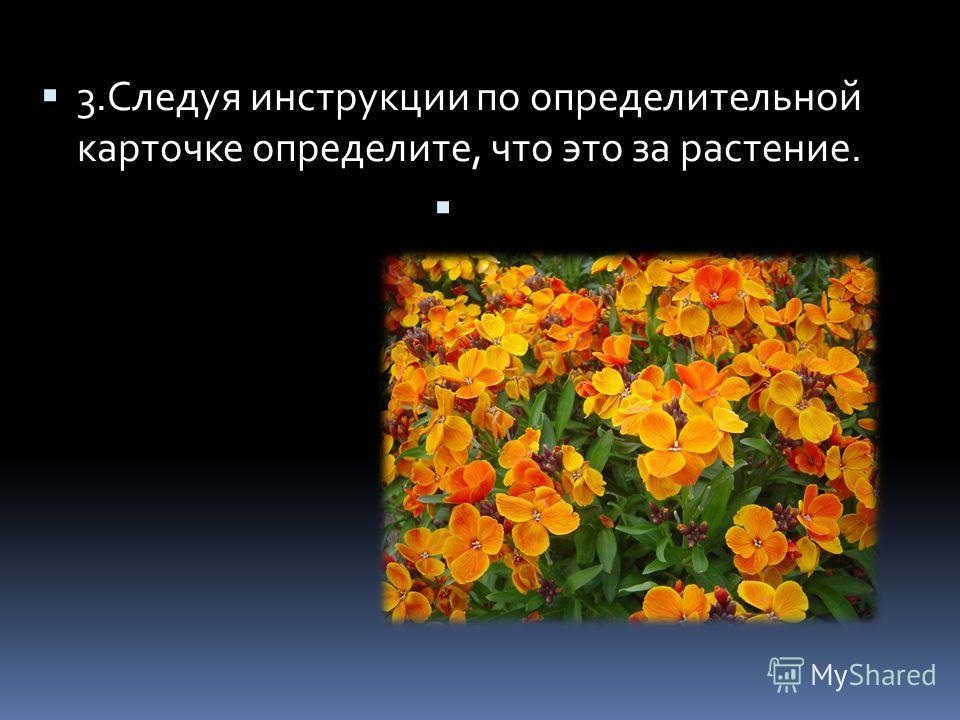 3.Следуя инструкции по определительной карточке определите, что это за растение.