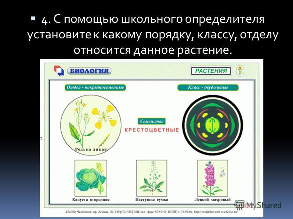 4. С помощью школьного определителя установите к какому порядку, классу, отделу относится данное растение.