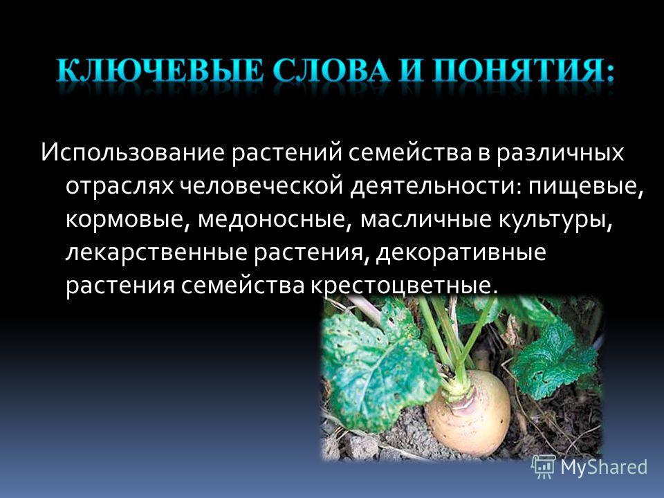 Использование растений семейства в различных отраслях человеческой деятельности: пищевые, кормовые, медоносные, масличные культуры, лекарственные растения, декоративные растения семейства крестоцветные.