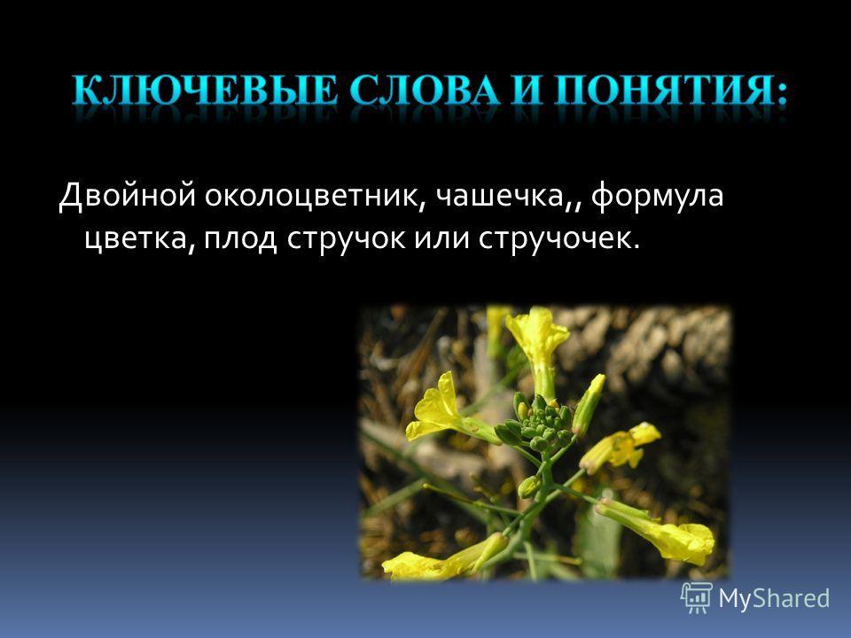 Двойной околоцветник, чашечка,, формула цветка, плод стручок или стручочек.