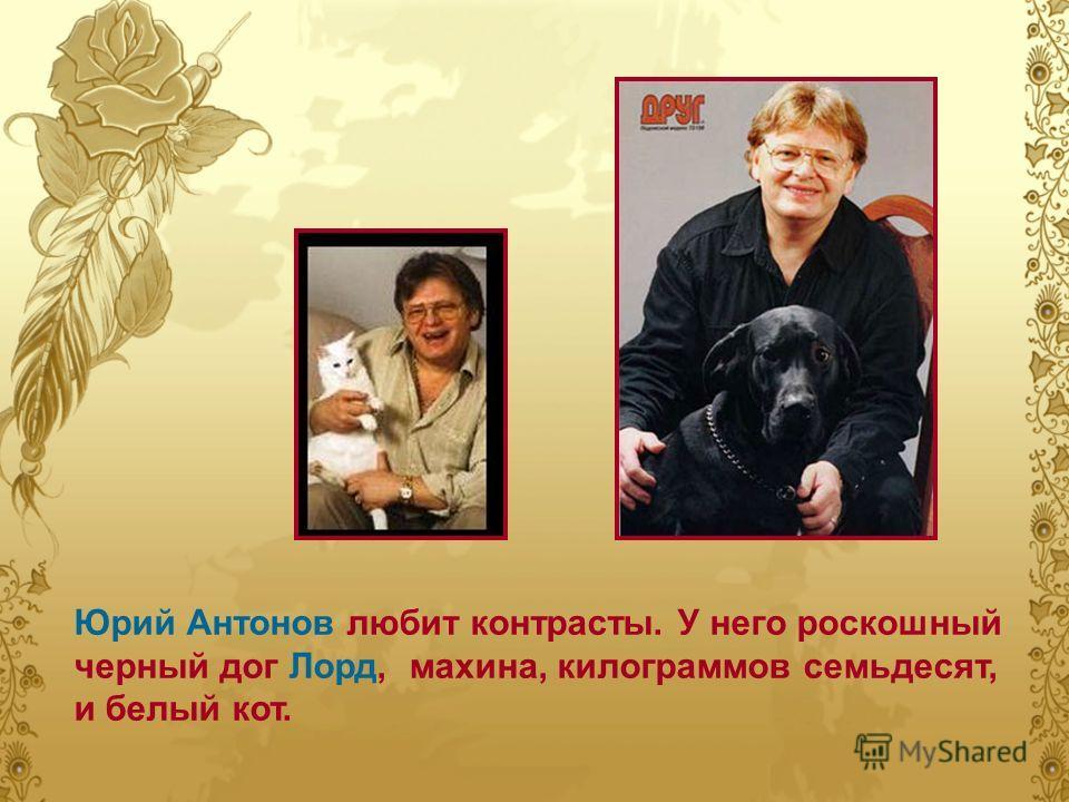 Юрий Антонов любит контрасты. У него роскошный черный дог Лорд, махина, килограммов семьдесят, и белый кот.