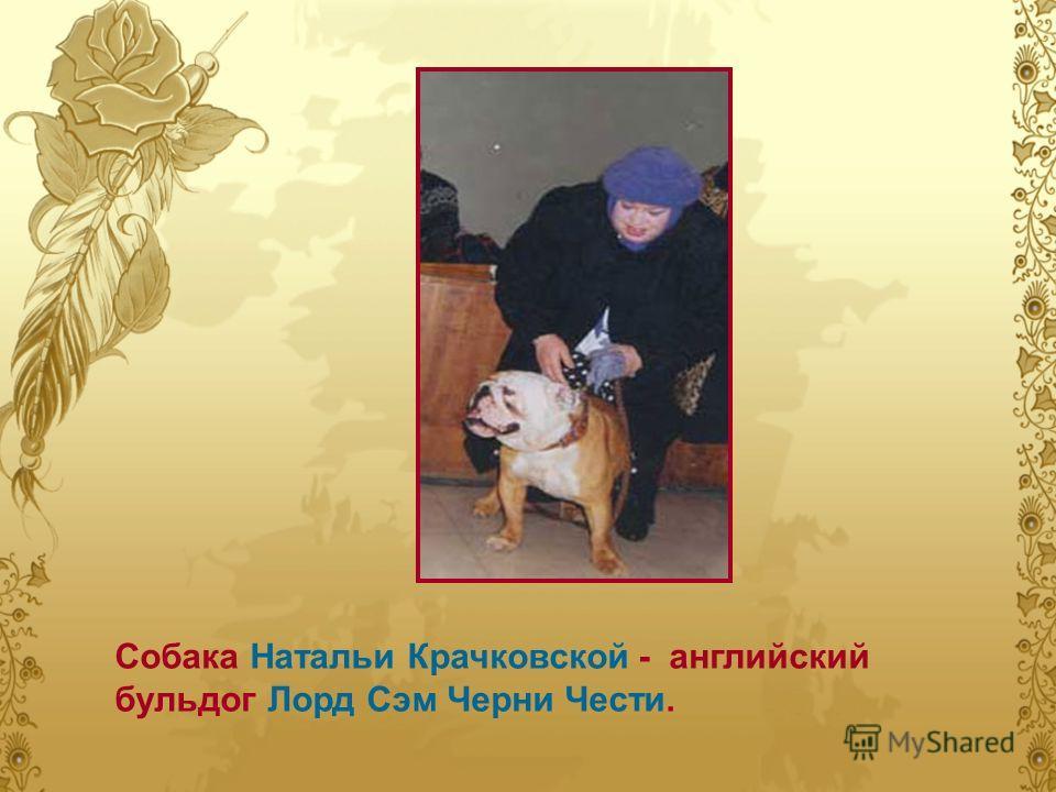 Собака Натальи Крачковской - английский бульдог Лорд Сэм Черни Чести.