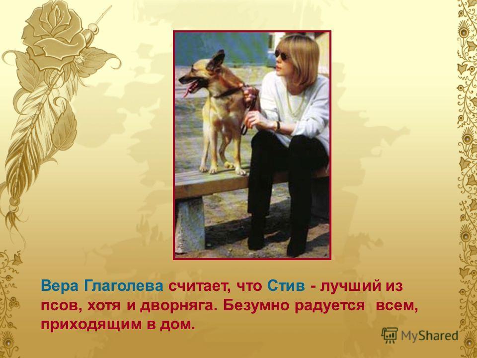 Вера Глаголева считает, что Стив - лучший из псов, хотя и дворняга. Безумно радуется всем, приходящим в дом.