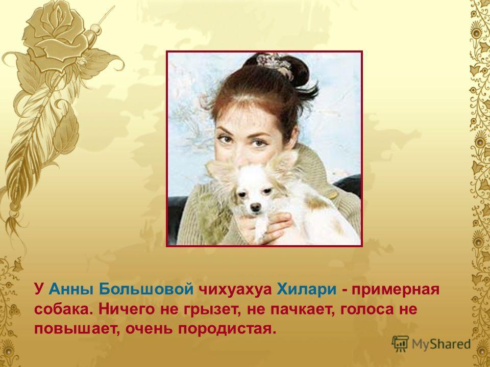 У Анны Большовой чихуахуа Хилари - примерная собака. Ничего не грызет, не пачкает, голоса не повышает, очень породистая.