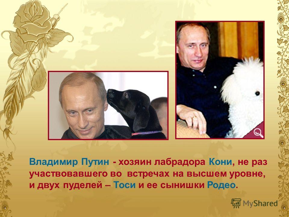 Владимир Путин - хозяин лабрадора Кони, не раз участвовавшего во встречах на высшем уровне, и двух пуделей – Тоси и ее сынишки Родео.