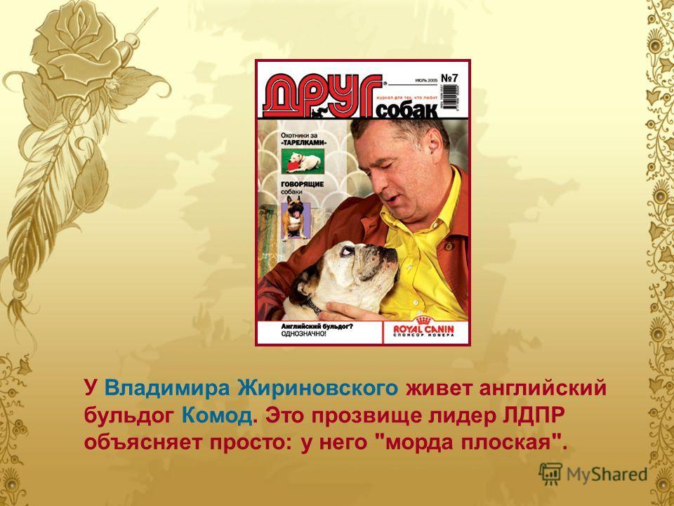 У Владимира Жириновского живет английский бульдог Комод. Это прозвище лидер ЛДПР объясняет просто: у него морда плоская.