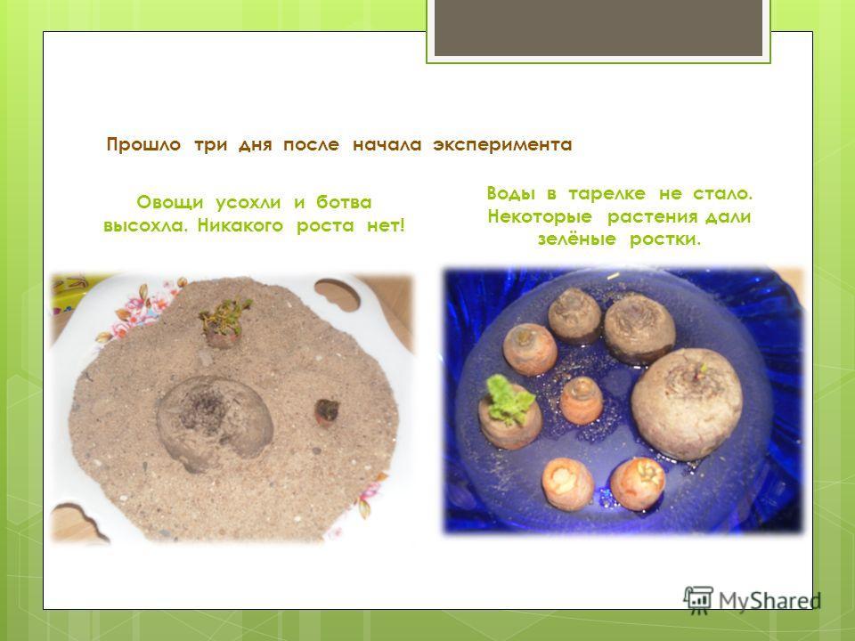 Прошло три дня после начала эксперимента Овощи усохли и ботва высохла. Никакого роста нет! Воды в тарелке не стало. Некоторые растения дали зелёные ростки.