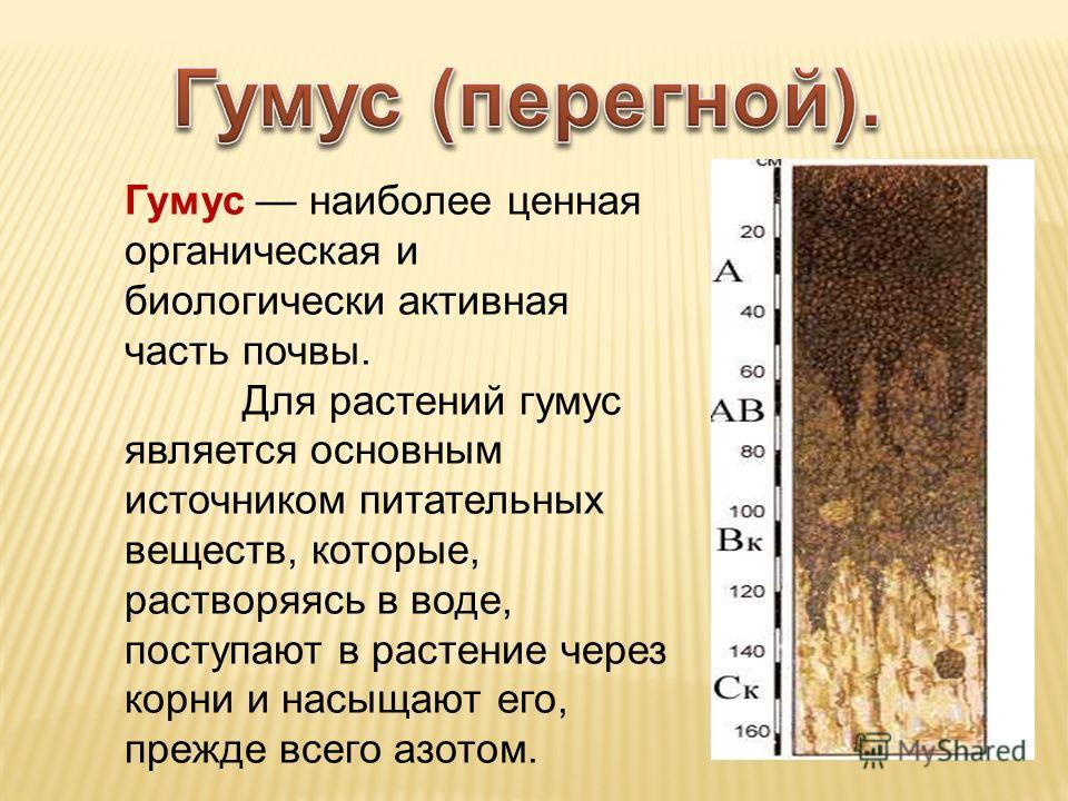Гумус наиболее ценная органическая и биологически активная часть почвы. Для растений гумус является основным источником питательных веществ, которые, растворяясь в воде, поступают в растение через корни и насыщают его, прежде всего азотом.