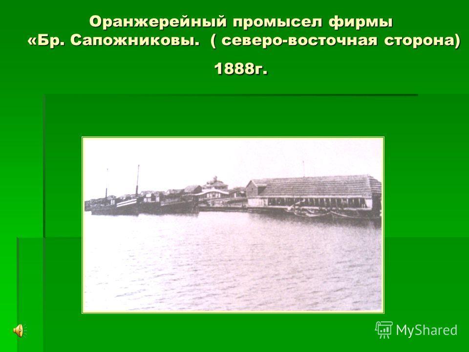 Оранжерейный промысел фирмы «Бр. Сапожниковы. ( северо-восточная сторона) 1888г.
