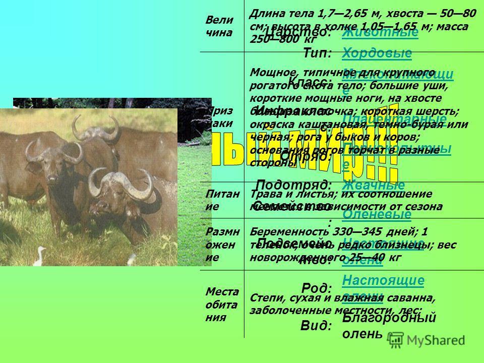 На территории Русской равнины платформенные отложения залегают практически горизонтально, составляя низменности и возвышенности, формирующие рельеф поверхности. Там, где складчатый фундамент выступает на поверхность, образуются возвышенности и кряжи