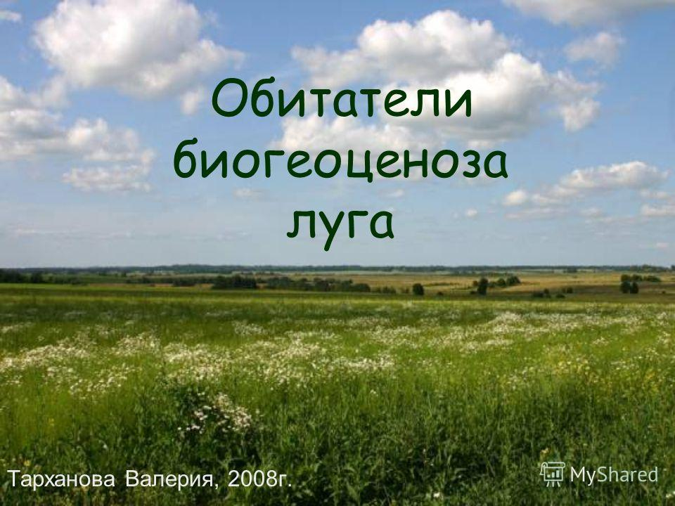 Обитатели биогеоценоза луга Тарханова Валерия, 2008г.