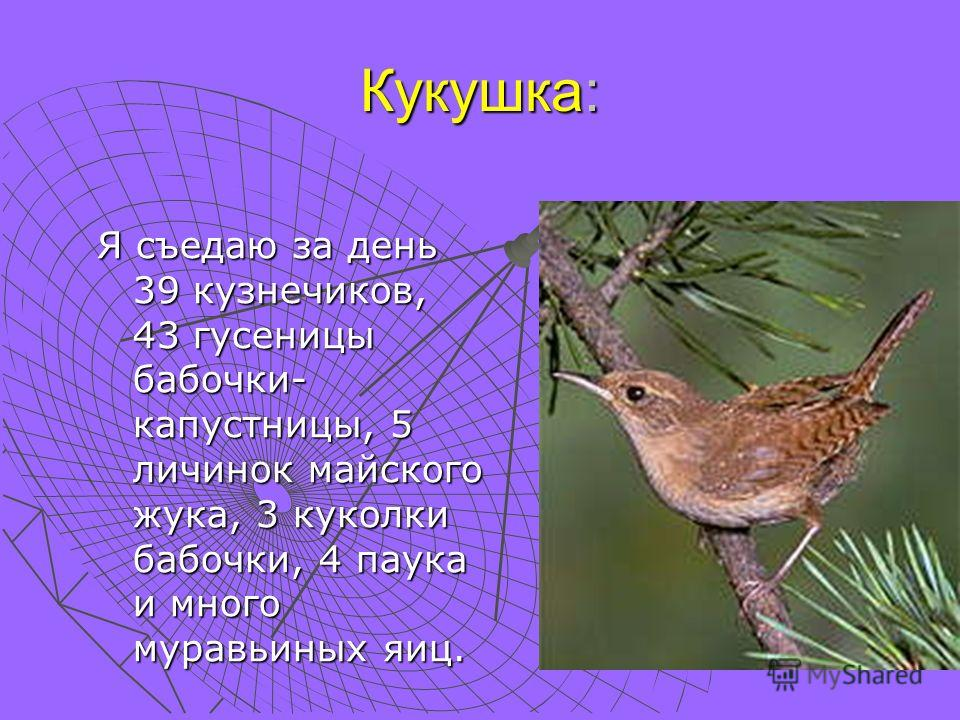 Кукушка: Я съедаю за день 39 кузнечиков, 43 гусеницы бабочки- капустницы, 5 личинок майского жука, 3 куколки бабочки, 4 паука и много муравьиных яиц.