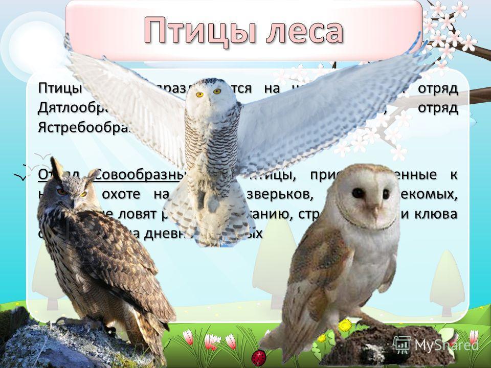 Птицы леса подразделяются на четыре отряда: отряд Дятлообразные, отряд Курообразные, отряд Ястребообразные и отряд Совообразные. Отряд Совообразные. Это птицы, приспособленные к ночной охоте на мелких зверьков, птиц, насекомых, некоторые ловят рыбу.