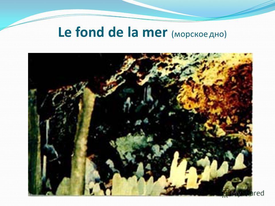 Le fond de la mer (морское дно)