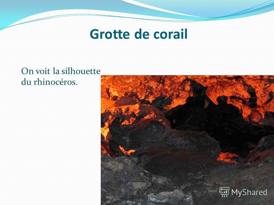 Grotte de corail On voit la silhouette du rhinocéros.