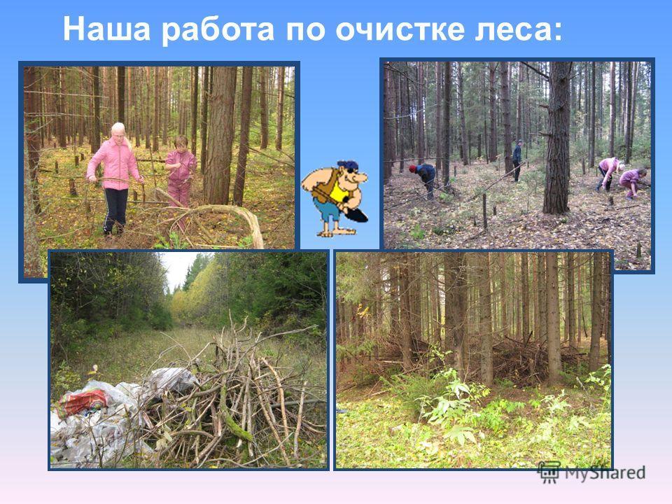 Наша работа по очистке леса:
