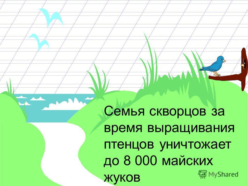 Одна птица за светлое время суток осматривает до 2000 веток, а за один год уничтожает до 60 000 000 личинок. Две синицы всё лето могут охранять сад в 40 деревьев. Каждая взрослая птица съедает столько пищи, сколько весит сама.