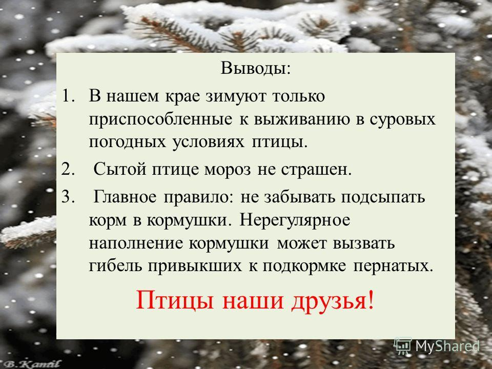 Выводы: 1.В нашем крае зимуют только приспособленные к выживанию в суровых погодных условиях птицы. 2. Сытой птице мороз не страшен. 3. Главное правило: не забывать подсыпать корм в кормушки. Нерегулярное наполнение кормушки может вызвать гибель прив