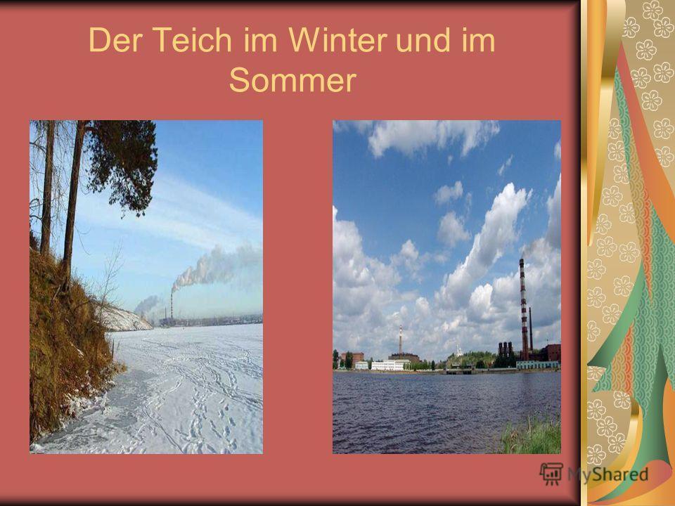 Der Teich im Winter und im Sommer