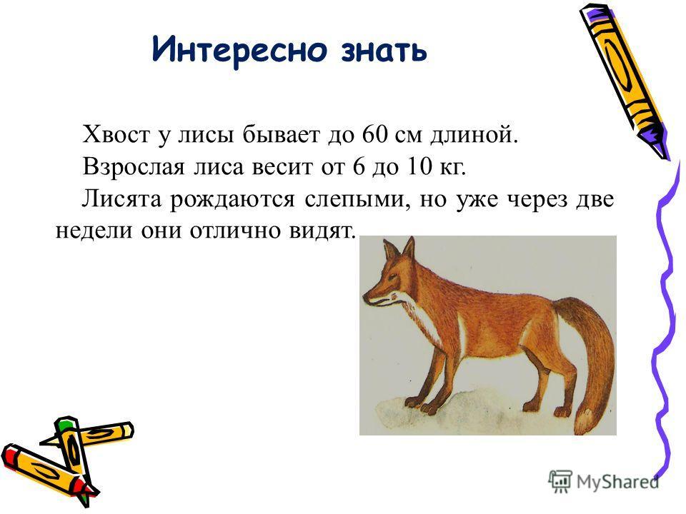 Интересно знать Хвост у лисы бывает до 60 см длиной. Взрослая лиса весит от 6 до 10 кг. Лисята рождаются слепыми, но уже через две недели они отлично видят.