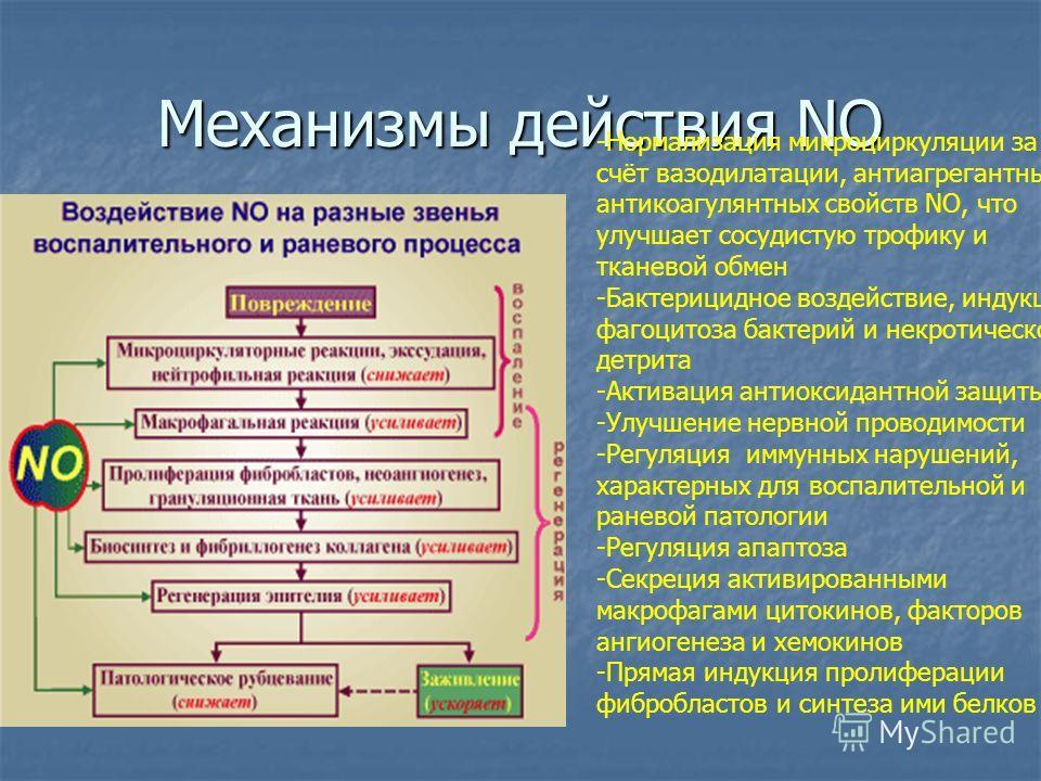Механизмы действия NO -Нормализация микроциркуляции за счёт вазодилатации, антиагрегантных и антикоагулянтных свойств NO, что улучшает сосудистую трофику и тканевой обмен -Бактерицидное воздействие, индукция фагоцитоза бактерий и некротического детри