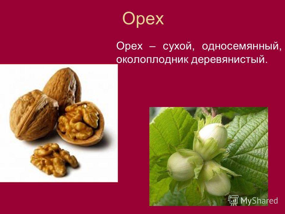 Орех Орех – сухой, односемянный, околоплодник деревянистый.