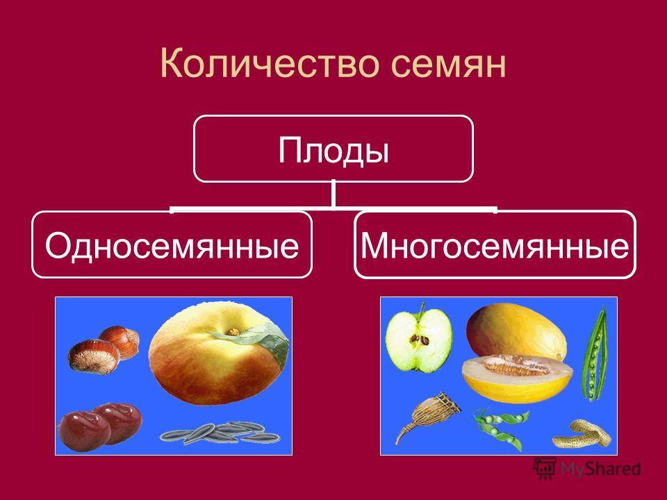 Количество семян Плоды ОдносемянныеМногосемянные