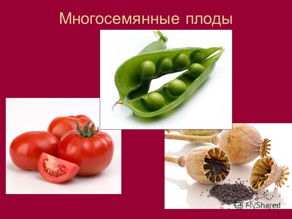 Многосемянные плоды