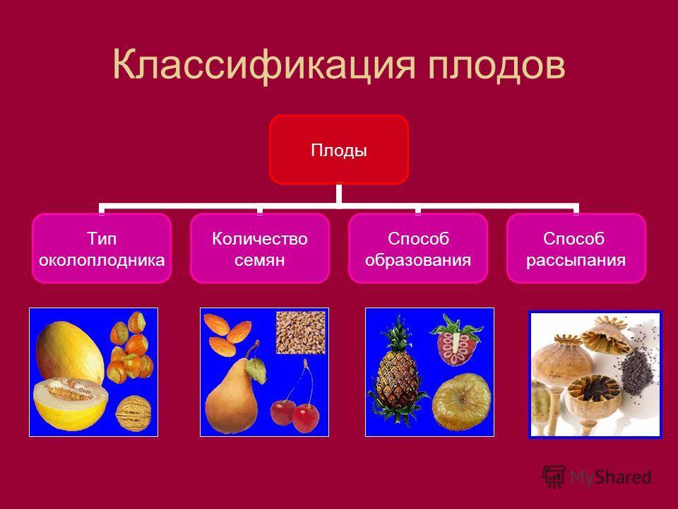 Классификация плодов Плоды Тип околоплодника Количество семян Способ образования Способ рассыпания
