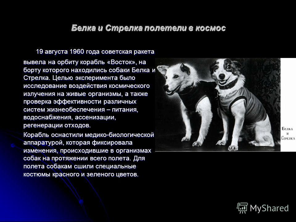 Белка и Стрелка полетели в космос 19 августа 1960 года советская ракета вывела на орбиту корабль «Восток», на борту которого находились собаки Белка и Стрелка. Целью эксперимента было исследование воздействия космического излучения на живые организмы