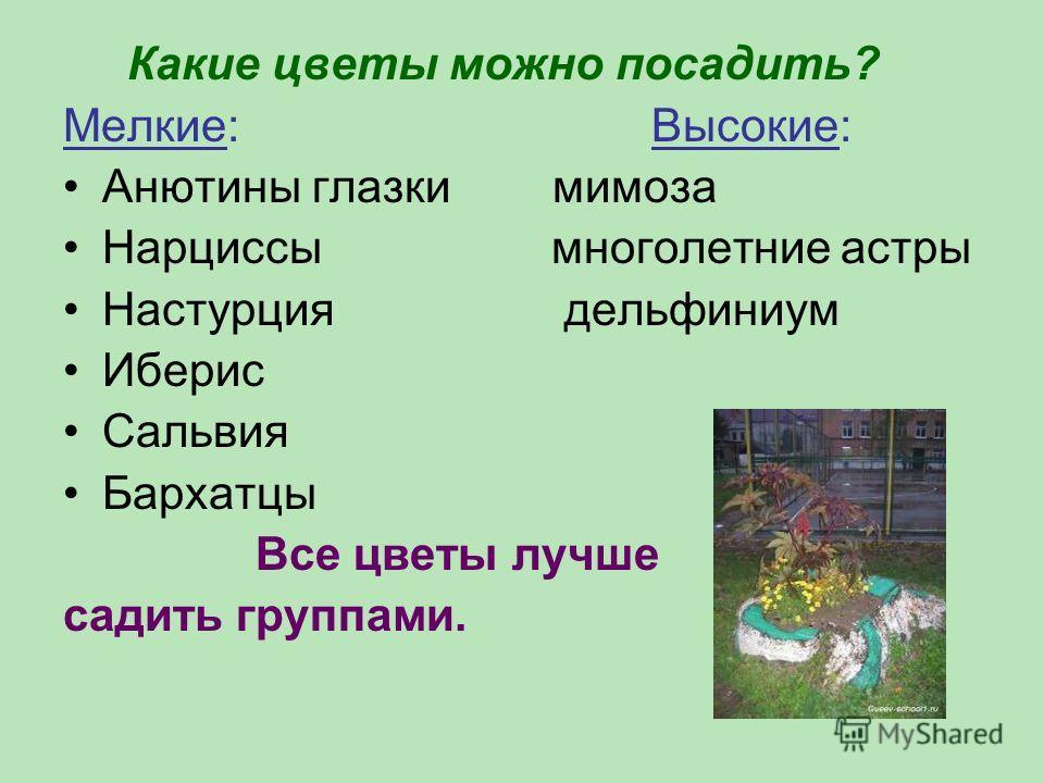 Какие цветы можно посадить? Мелкие: Высокие: Анютины глазки мимоза Нарциссы многолетние астры Настурция дельфиниум Иберис Сальвия Бархатцы Все цветы лучше садить группами.