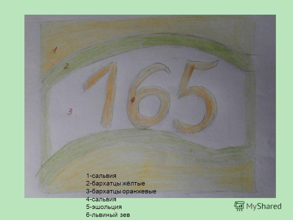 1-сальвия 2-бархатцы жёлтые 3-бархатцы оранжевые 4-сальвия 5-эшольция 6-львиный зев