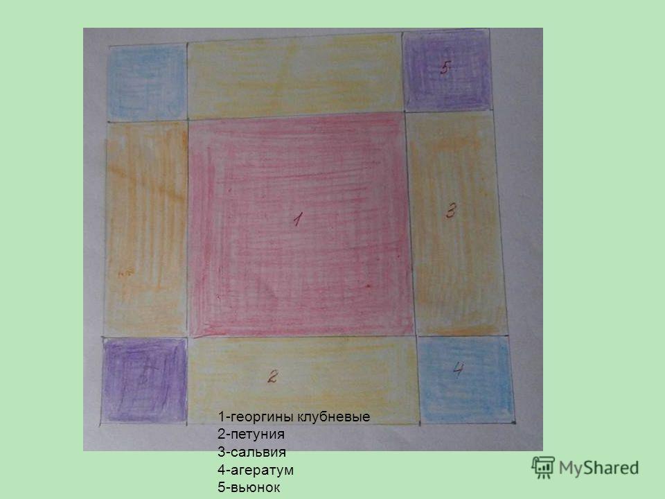 1-георгины клубневые 2-петуния 3-сальвия 4-агератум 5-вьюнок