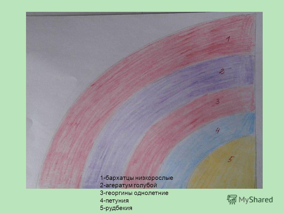 1-бархатцы низкорослые 2-агератум голубой 3-георгины однолетние 4-петуния 5-рудбекия